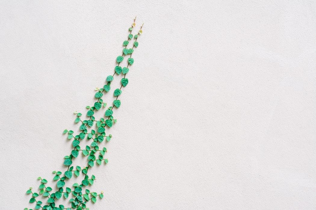 Selos de sustentabilidade contribuem para o alcance de novos nichos de mercado.
